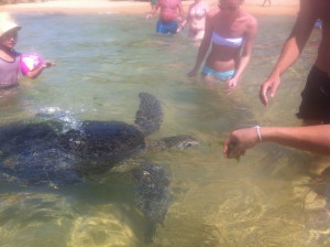 Beachgoers Feeding Seaweed to the Turtles