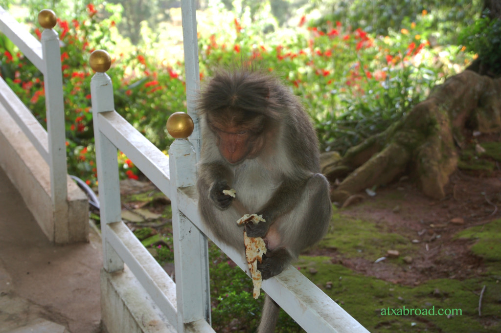Another Bold and Sated Monkey